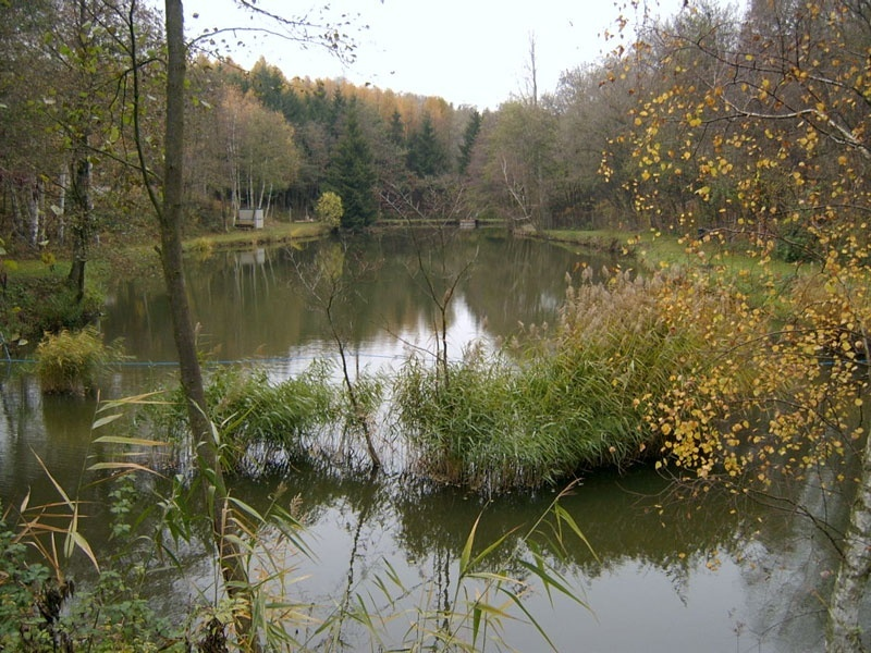 Teich loipersbach patrick 39 s angelshop for Teich mit fischen
